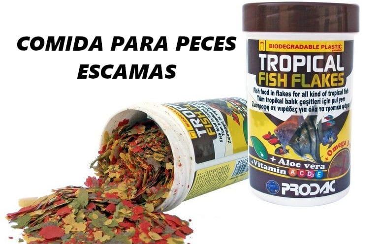 mejor comida para peces tropicales