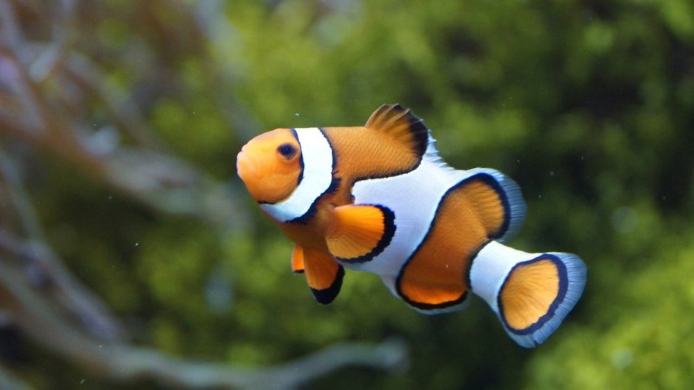 comida para peces marinos