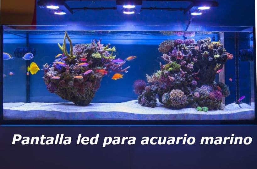 Acuario marino lleno de corales de colores y peces marinos.