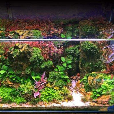acuario plantado