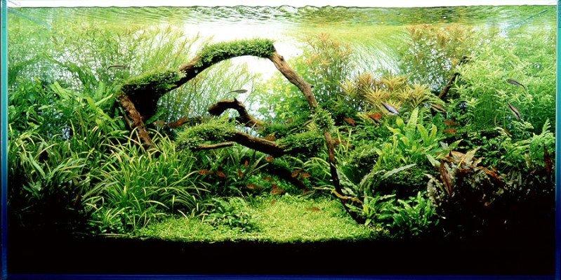 acuario plantado.