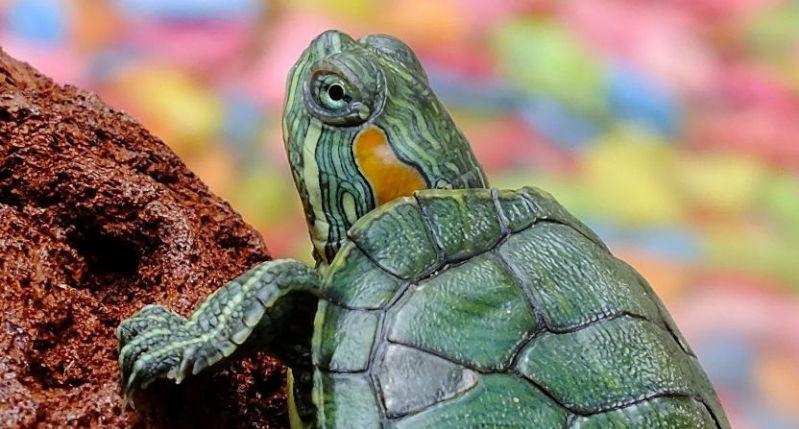 calentador de agua para tortugas